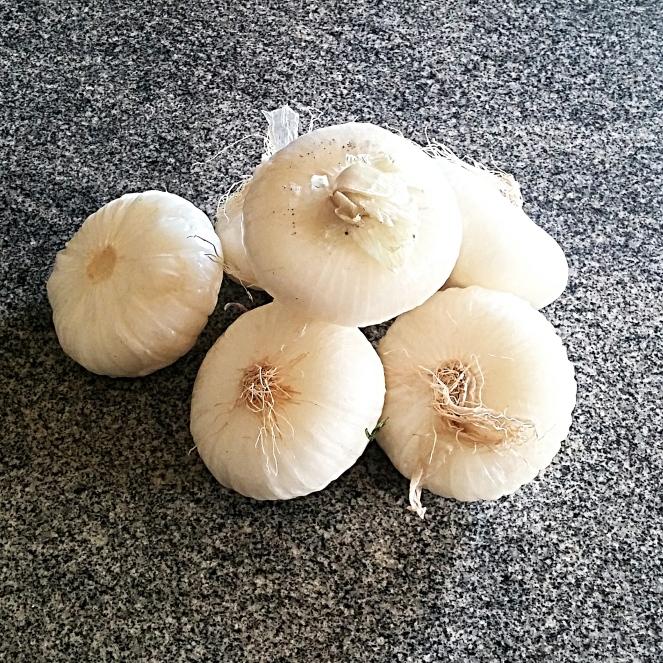 Cipolle bianche fresche da pulire eliminando la buccia.