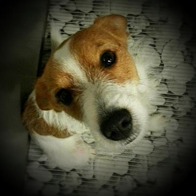 il nostro cane Freddie che segue con attenzione i movimenti in cucina
