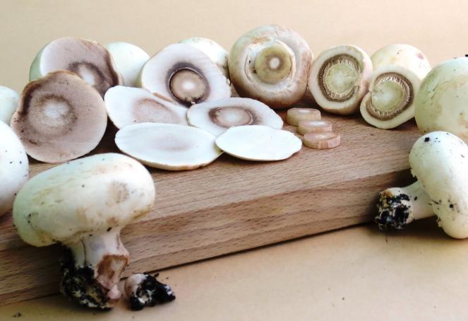 Champignon: i funghi sono l'ingrediente principale di questa ricetta senza glutine facile e veloce da preparare
