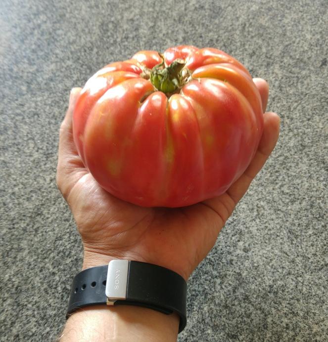 Oltre 550 gr di peso per l'esemplare di pomodoro cuore di bue utilizzato per preparare la nostra ricetta glutenfree di oggi
