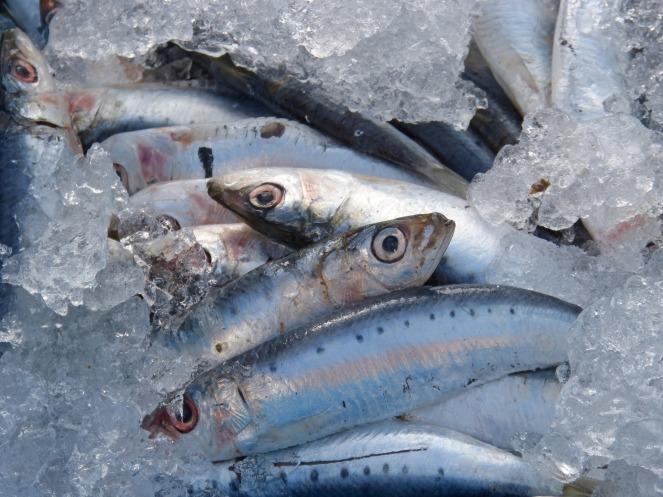 Sardine appena pescate sono l'ideale per preparare le sarde in saor. In questo modo, dureranno più giorni grazie alla speciale tecnica di marinatura.
